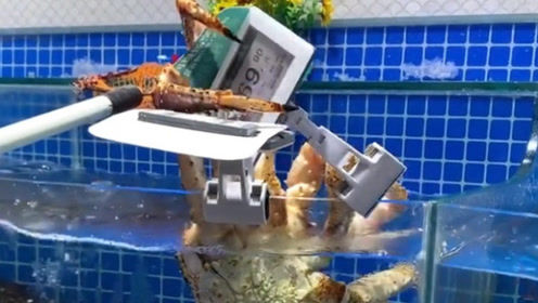 帝王蟹:听说猪肉涨价了,咱也不能输,我拽下来改改价格!