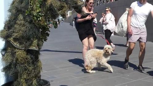 外国男子街头恶搞,街边突然出现绿毛怪,路过的狗狗吓到飞起
