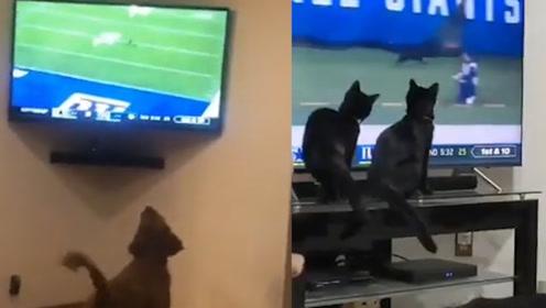 黑猫闯进球场引球迷欢呼 电视前的猫和狗狗们瞬间兴奋围观助阵