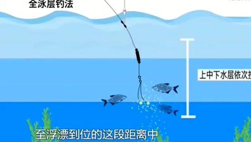 当判断出鱼层出现在中上层之后,应该采用浮钓战术