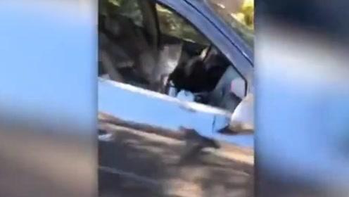 哭笑不得!美国一女子停车忘关车窗 车被5只流浪猫强行占领