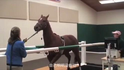 给马检查人体是在跑步机上检查,结果给马检查蒙圈了!