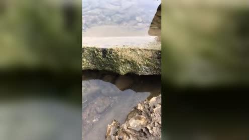 大地出奇迹!七彩鳗鱼!