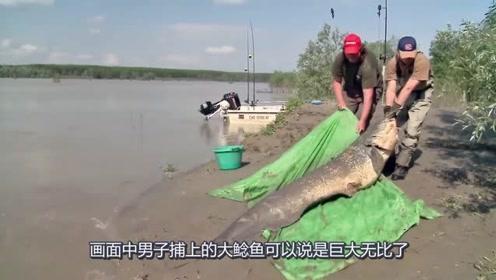 钓鱼:野外河中钓巨型鲶鱼王,简直要成精了