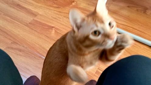 吸吸:橘猫看见猫粮突然蹿出来,主人却把食物拿走,猫咪差点馋疯