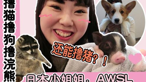 awsl!撸猫撸狗撸浣熊撸猪猪!日本小姐姐被萌化了