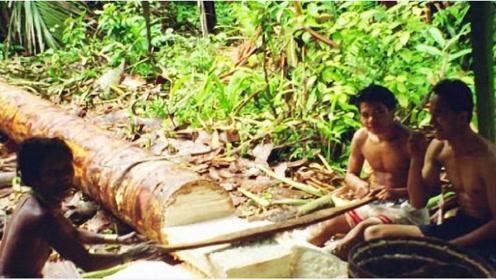 世界上最不正经的椰子树,从不长一颗椰子,却养活了数百万人