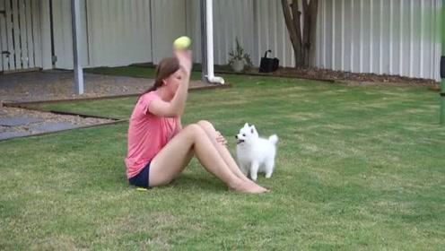 小狗狗真乖,女主人把球扔出去它马上捡回来