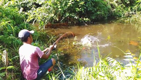 废弃水坑边野钓,突然有鱼咬钩,钓友迅速收杆,大鱼轻松到手!