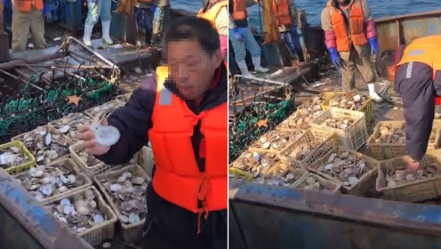 獐子岛扇贝第3次大规模死亡 5亩海域仅打捞26公斤活扇贝