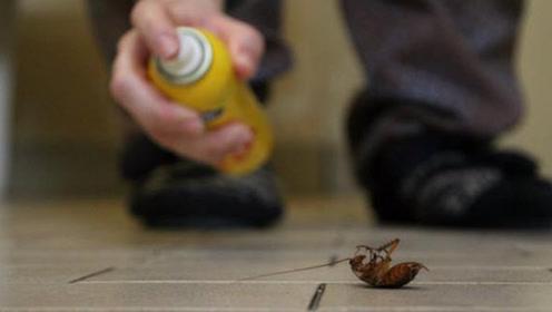假如一只蟑螂被饿死,需要多少天?看完你就可以跟朋友吹嘘了!