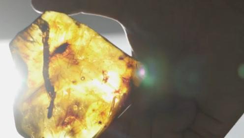 世界首枚琥珀虾被中国发现,距今约2200万年,概率为几亿分之一!