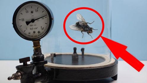 把苍蝇放在真空室中,不断抽走内部空气,实在是太爽了