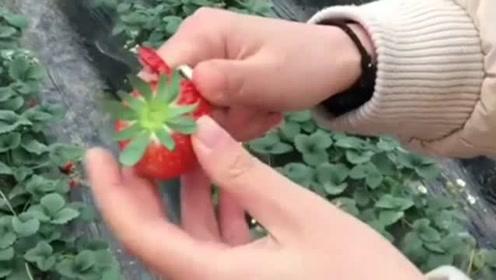 看到白富美老婆吃草莓的方式,瞬间想离婚了!真是太奢侈了!