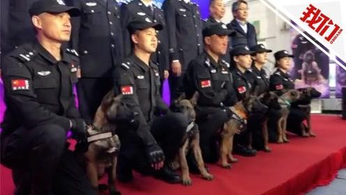 """6只克隆警犬""""入职""""北京市公安局 单胎产4头克隆犬属世界首例"""