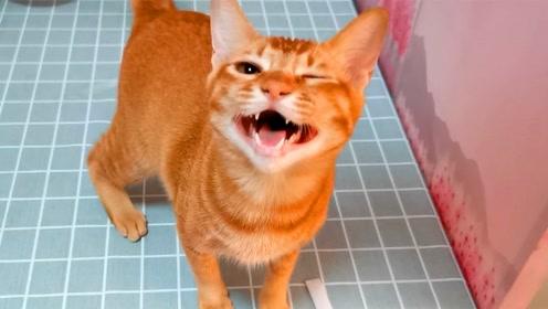 吸吸:橘猫被主人用猫粮骗过来却吃不到,疯狂撒娇终于讨到吃的