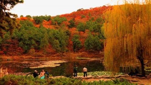 秋季枫叶红的烧红半边天,被人称为小香山,但一点不逊色北京香山