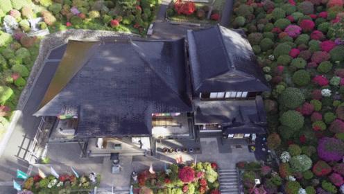 日本奇葩又浪漫的寺庙,寺内不烧香却种满鲜花,四季花开不败