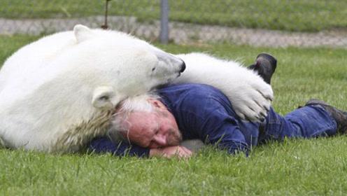 善良老人收养北极熊,16年长到700斤,最后却这样对待老人!