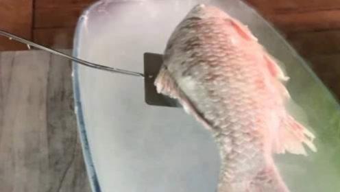 被液氮冰冻的鱼,一到水中照样生龙活虎,人体能否实现?