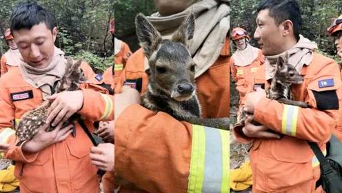 丢一个妈来一群爸!小鹿山火中走丢,消防员救出怀抱摸头安抚
