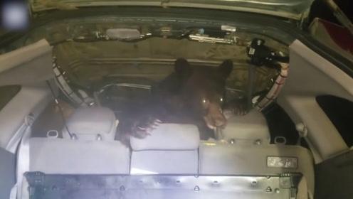 面包车深夜报警,男子打开后备箱一看,发现一头黑熊瞬间吓懵