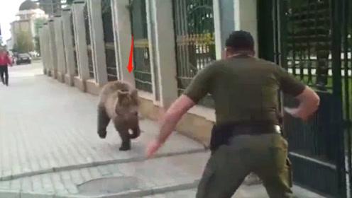 棕熊出逃大街上疯跑,被男子一脚踢到墙上,下一秒忍住不要笑