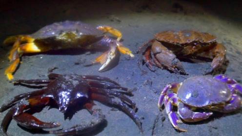 小伙黑夜赶海,各种螃蟹随便抓,用酒泡完煮着吃