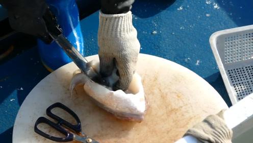 大妈打渔回来现场卖海鲜,2条墨鱼160元,顾客:比市场的新鲜
