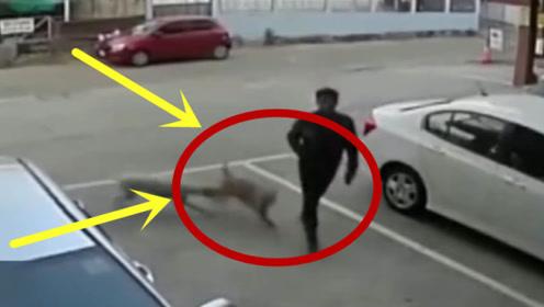 两只狗子在路边打架,不料却殃及到了大叔,3秒后意外瞬间发生!