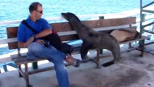 霸气的海狮,想坐长板凳,为了赶走男子,也是煞费苦心!
