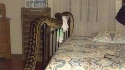 """美国女子被发现在""""蛇屋""""死亡,脖子上缠着一条2米蟒蛇!"""