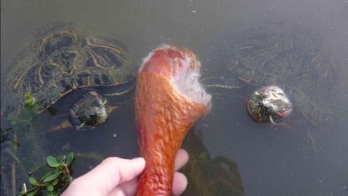 老外用鸡腿钓乌龟,这让谁能忍得了?