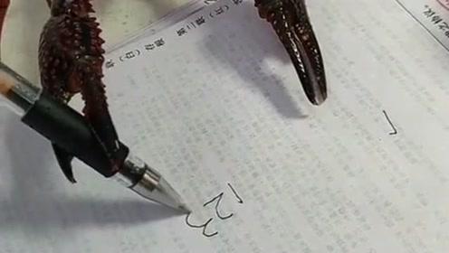 皮皮虾翻跟头相信你们见多了,但你们见过小龙虾写字吗,而且还没有人教!
