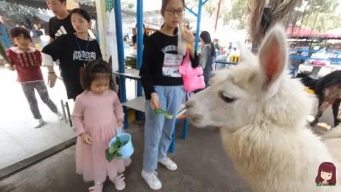 南宁动物园门票降到25元,星妈带上两个宝贝一起看动物,玩嗨了