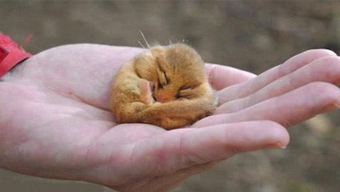 全球最懒生物,只有5年寿命,却硬要用4年的时间睡觉