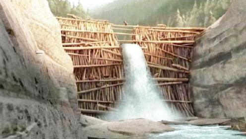 河狸花费一个月造就大坝,网友:真是大自然的神迹