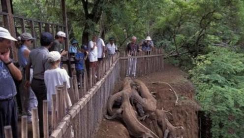 """村民发现""""奇特""""爬行生物,好奇围观拍照,专家看后立刻要求撤离"""