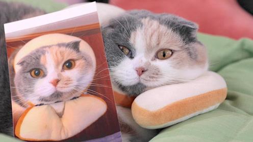 给猫咪看自己的照片,猫咪一脸茫然无法置信,主人笑出鹅叫
