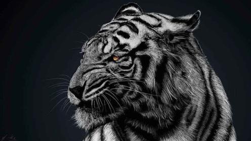 """印度出现罕见的""""黑色老虎"""",世上仅有一只,网友:这是刚挖完煤"""