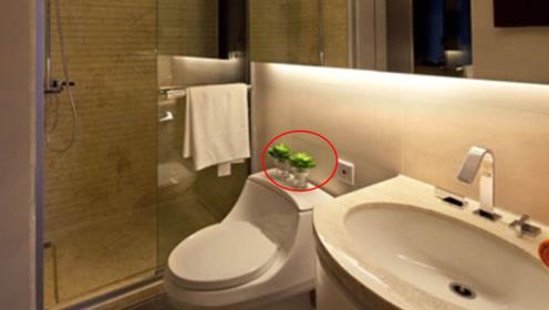 卫生间再大也不要放这3样东西,危害健康,很多人都忽略了!
