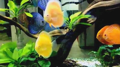 家中刚买来的一缸宝贝七彩鱼,凑近一瞧,结果真让人着迷!