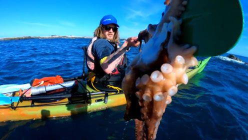 划皮划艇碰到海豹送礼物,居然还是大章鱼,镜头记录全过程