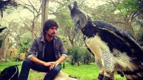 看到这种鸟类第1种反应,认为这是人装的,其实这是一只真鸟