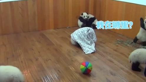 熊猫宝宝太调皮,奶妈的一个办法,让国宝迷失了方向!