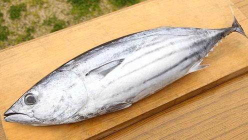 """世界上""""最坚硬""""的鱼,有人拿它当刀用,日本人的饮食却离不了它"""