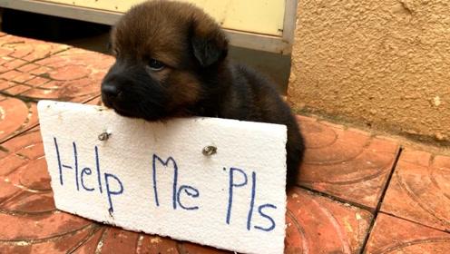 被主人遗弃的小狗,坐路边等着好心人带它回家,镜头记录感人画面