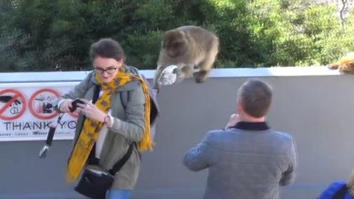 野猴子偷游客背包,小哥瞬间出手夺回,网友:干得漂亮