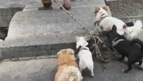 善良的流浪汉收养了这么多的流浪狗,狗狗不嫌弃他穷,一直跟随着!