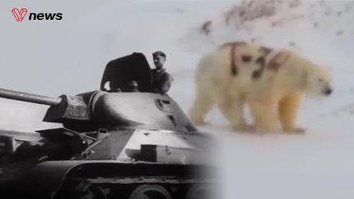 """俄罗斯北极熊被涂鸦""""T-34"""",专家称或将影响生存能力"""